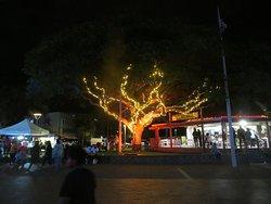 Coloration originale  d'un arbre à l'occasion des fêtes de fin d'année.