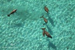 Dugong party at Mangrove Bay