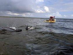 Coastal Backwater Adventures