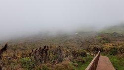 Mist shrouded path up