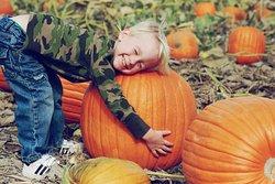Our Annual Pumpkin Patch is so much FUN!