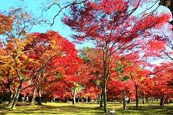 岡山後楽園 千入(ちしお)の森