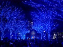 blue cave shibuya yoyogi park12