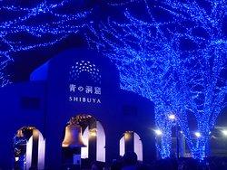 blue cave shibuya yoyogi park13