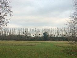 Mistletoe in the grounds
