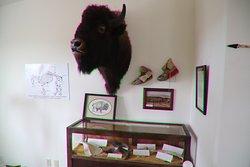 A buffalo head