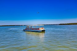 The Dolphin Quest in Boca Ciega Bay