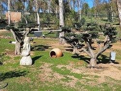 Jardín de olivos