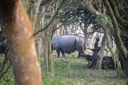 Rhino spotted at Pobitora Santuary