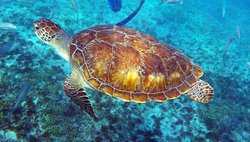 Tulum Dive and Snorkel 12