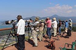 大陸から渡ってくる鷹を狙っているカメラマンたち