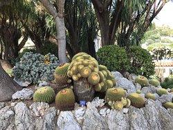 Great cacti