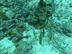 Amazing diving