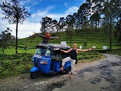 Lipton tea plantation