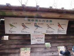 見られる鳥なども説明されています。