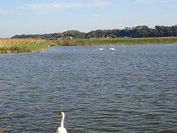 野鳥などが多い自然豊かな沼です。