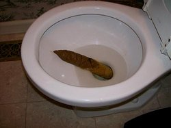 3 Foot Dump I Found In The Men's Room Toilet And It Looked Like A Louisville Slugger Baseball Bat...!