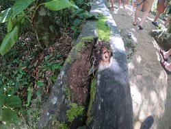 Xenotes by Xcaret  Tour of 4 beautiful cenotes  A full day of adventure