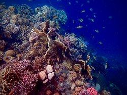 Angelleys Reef (our back garden)