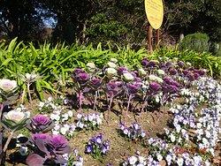 3ヘクタールある公園なのに、浦安市の公園造成計画にはない花壇を数多く増やし続けているのに、大きく花咲く種だというのに、わざわざ小さく育てて、スカスカに植え付けるという、苦行のような公共花壇は、誰もが手伝いたくなる公園ボランテイアの作業ではありません。 この公園ボランテイア達の活動は、変化も進化もありません。この公園は、やっているようでやっていない、公園美化ボランテイアの活動のおかげで、どんどん荒廃して来ています。