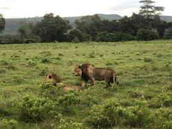 Safari photos 2019/2020