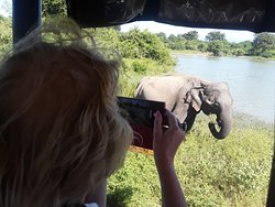Udawalawa national park srilanka