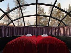 森林裡的玻璃屋