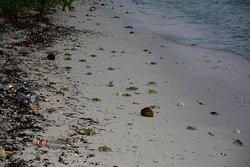 Грязный противоположный берег острова Ган: Лаккадивское море (часть Индийского океана). Много крабов