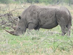 Etosha TWo Day Camping Safari