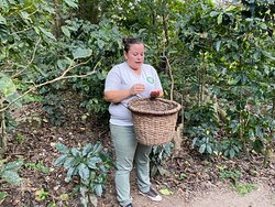 Lovely tour guide explaining how the coffee beans are picked and harvested.