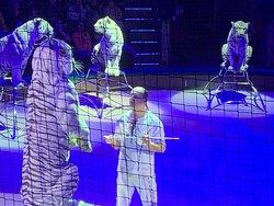 Vilde tigre i Cirkus