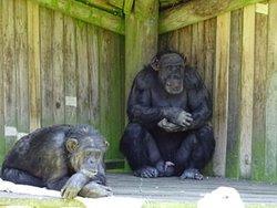 Wellington zoo decembre 2019