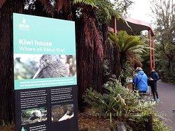 Ingresso per i Kiwi