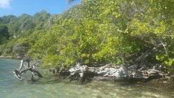 Plage des amoureux, mangrove et iguane de l îlet Chancel