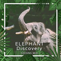 Elephant Discovery Chiang Mai - Day Tours