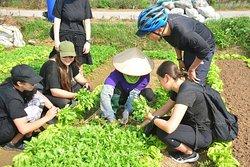 Bicycle Tours In Hanoi,Hanoi Bicycle Tours,Hanoi Bike Tours,Bike Tours Hanoi,Biking Tours In Hanoi,Hanoi Cycling Tours Countryside,Hanoi Bike Tours City Half Day,Vietnam Biking Tours,Vietnam Cycling Tours,Vietnam Bike Tours
