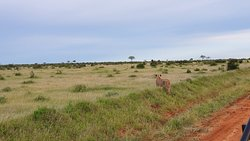 The best safari!