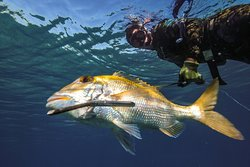 Spearfishing Caribe