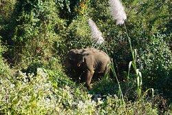 Glückliche Elephanten