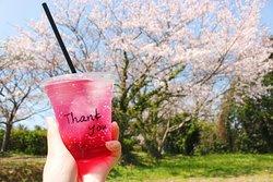春には隣の公園でピクニックも* In the spring you can see beautiful cherry blossom.