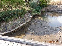 本当に15センチも水深がないとは、あきれるというか、浦安市役所の職員が、気の毒です。  公園美化ボランテイアが、公園池をこんな状態にしておいて、反省も謝罪もなく、改修に、市民の税金がつかわれるとは、怒りが湧いてきます。  公園をこんなに状態にしたい職員はいません。 2007年から、ずっとふれあいの森公園を育む会を 信用し、「協働」だから、少しのことは目をつぶるという浦安市行政の広い心を裏切ったのはボランテイア代表です。