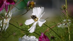 Doing our bit to encourage bees into the garden