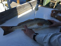 Perfect size redfish for dinner for two