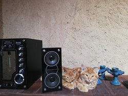 Our pets in Ariz Ecocastle, purely Yazdian race!