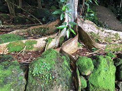 We loved the ribbon roots and the countless moss rocks