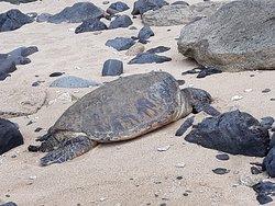 Sea Turtle on Napli Coast