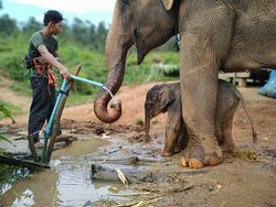 Baby Elephant Henry experiencing water the first time.