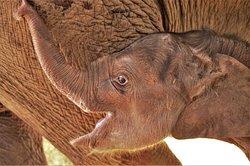 Happy - happier - Happy elephant Baby.