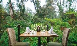 The Canopy Restaurant