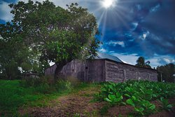 Tobacco storage barn near Vinales.  This is a government barn, I was informed how to tell the difference. Vinales Cuba